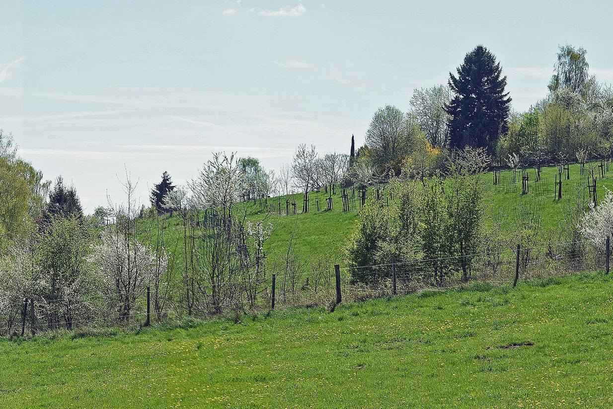 Obstsortengarten der Oberlausitz-Stiftung