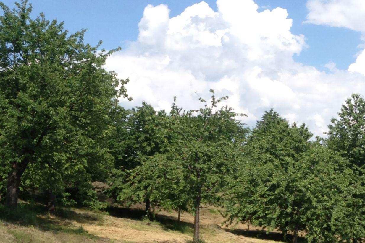 Streuobstwiese im Ortsteil Bergfrieden