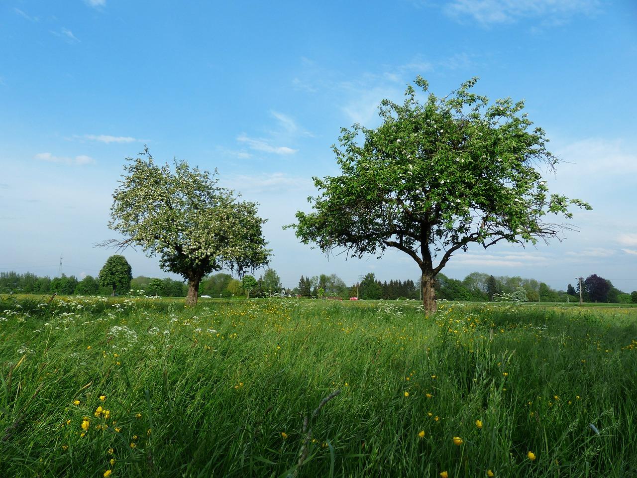 Obstsortengarten der Stadt Cvikov (Město Cvikov)